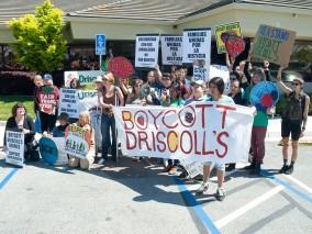 boycott-driscolls-watsonville_1_3-31-16-1200x900-1.jpg